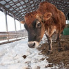 20140314-Farm_Sanctuary_Snow-4378