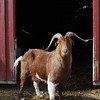 20140315-Farm_Sanctuary_Snow-4615