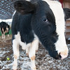20140314-Farm_Sanctuary_Snow-4354
