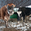 20140314-Farm_Sanctuary_Snow-4368