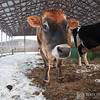 20140314-Farm_Sanctuary_Snow-4379