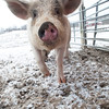 20140316-Farm_Sanctuary_Snow-4806