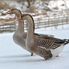 20140315-Farm_Sanctuary_Snow-8304