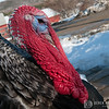 20140314-Farm_Sanctuary_Snow-4234