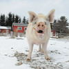 20140316-Farm_Sanctuary_Snow-4736