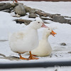 20140316-Farm_Sanctuary_Snow-8381