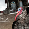 20140315-Farm_Sanctuary_Snow-4538