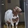 20140315-Farm_Sanctuary_Snow-8325