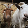 20140316-Farm_Sanctuary_Snow-4663
