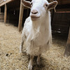 20140316-Farm_Sanctuary_Snow-4656