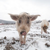 20140316-Farm_Sanctuary_Snow-4798