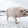 20140316-Farm_Sanctuary_Snow-4752