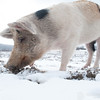 20140316-Farm_Sanctuary_Snow-4794