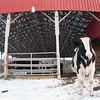 20140314-Farm_Sanctuary_Snow-4384