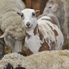 20140315-Farm_Sanctuary_Snow-8335