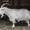 20140316-Farm_Sanctuary_Snow-4650
