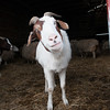 20140315-Farm_Sanctuary_Snow-4561