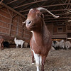 20140314-Farm_Sanctuary_Snow-4332
