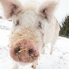 20140316-Farm_Sanctuary_Snow-4748