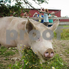 20130803_Farm_Sanctuary_Hoe_Down_8007