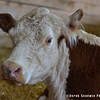 20130803_Farm_Sanctuary_Hoe_Down_5936