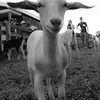 20130803_Farm_Sanctuary_Hoe_Down_8193