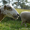 20140802-Farm_Sanctuary_Hoe_Down-8303