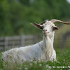 20140802-Farm_Sanctuary_Hoe_Down-8248