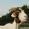 20140802-Farm_Sanctuary_Hoe_Down-7846