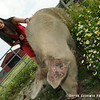20140802-Farm_Sanctuary_Hoe_Down-7797