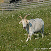 20140802-Farm_Sanctuary_Hoe_Down-8236
