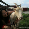 20140802-Farm_Sanctuary_Hoe_Down-7852