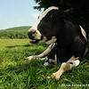 20140802-Farm_Sanctuary_Hoe_Down-7720