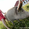 20140802-Farm_Sanctuary_Hoe_Down-8208