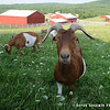 20140802-Farm_Sanctuary_Hoe_Down-7823