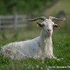 20140802-Farm_Sanctuary_Hoe_Down-8244