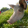 20140802-Farm_Sanctuary_Hoe_Down-8204