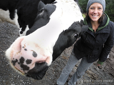 Dylan the steer's big head next to Lil' Ole Jenny Brown, human co-founder of Woodstock Farm Animal Sanctuary