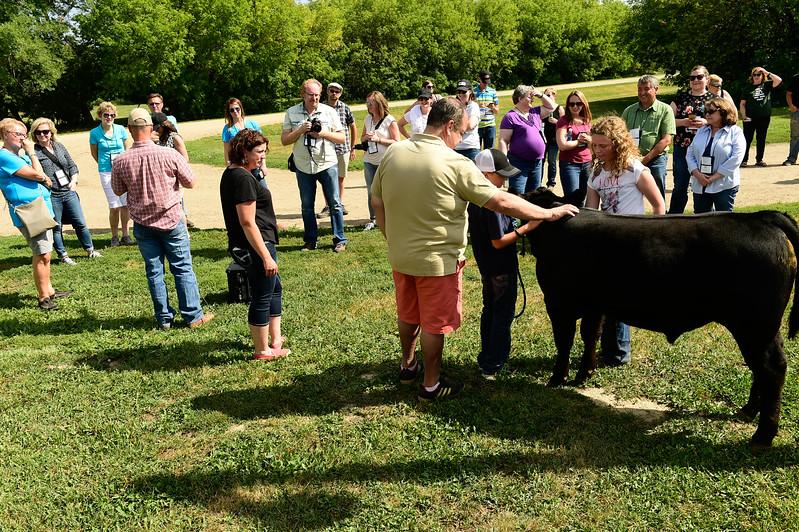 Wilbar Cattle Company