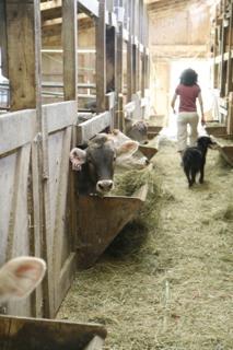 Courtesy Dana Styber, July '09.  Kim and Katie in calf barn.