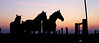 Horses silhouetted in sunset light on our Amish neighbor's farm