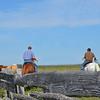 Ranchers on horseback head toward cattle in corral