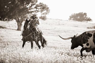 audrey + longhorn 2016-8932sg