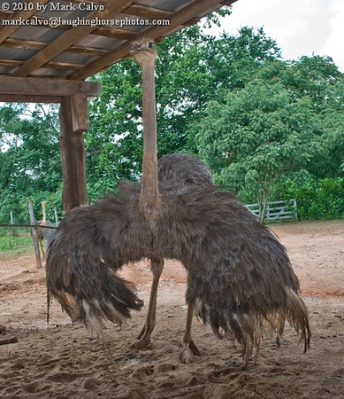 Perkins Family Ostrich Farm