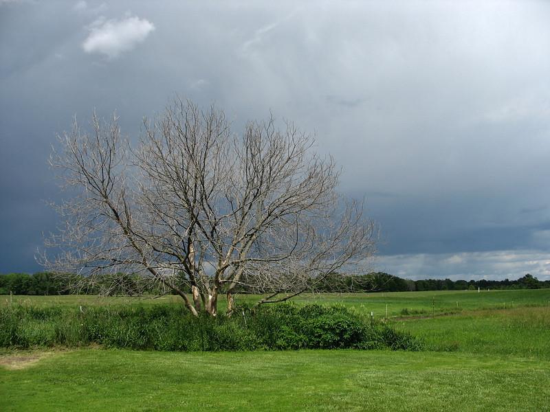 Tree and Farm Field