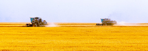 Sea of Wheat