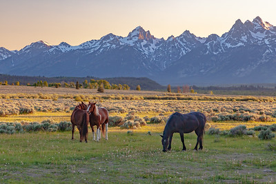 Triangle Ranch Teton NP