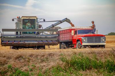 Transferring Wheat