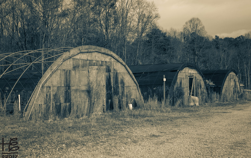 Dilapidated greenhouses