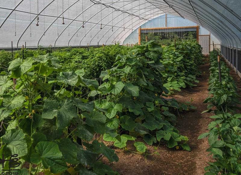 Lush high-tunnel crops